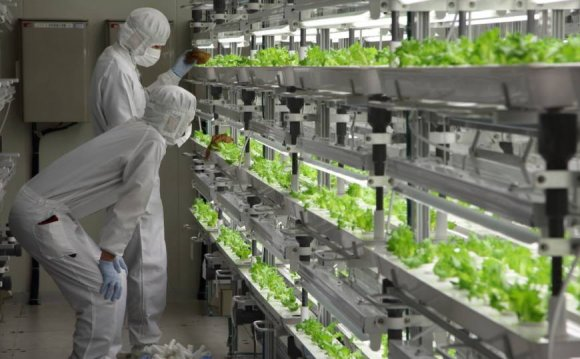 Workers inspect lettuce at the